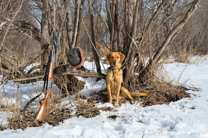 Hunting dog and rifle