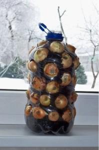 onions-on-windowsill-Copy-198x300