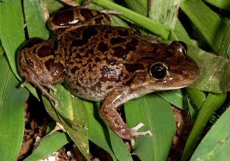 Useful Information About Frogs and Toads and Their Benefits  101