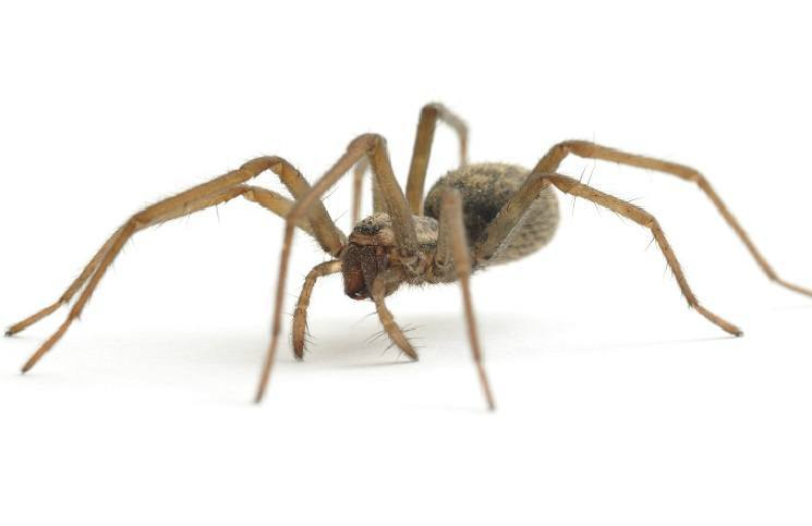 Natural ways to keep spiders under control for Home remedies to keep spiders away