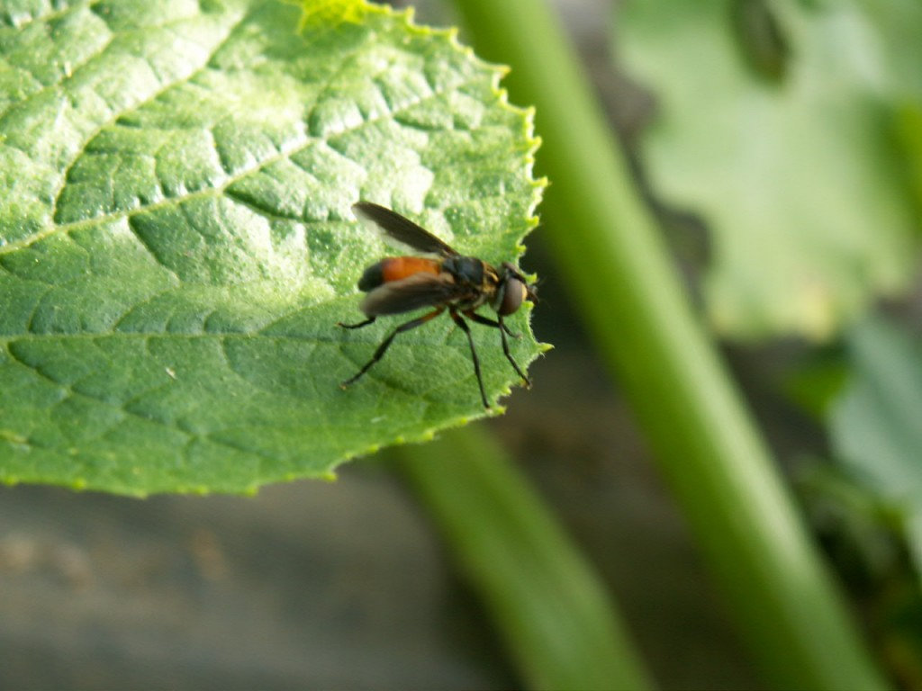 Controlling Squash Bug Infestations In Your Garden