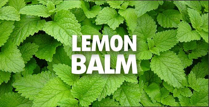 Lemon-Balm