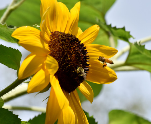bee-flower-59-1