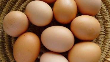 eggs-700x400