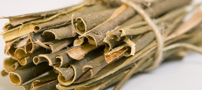 White-willow-bark-Salix-alba