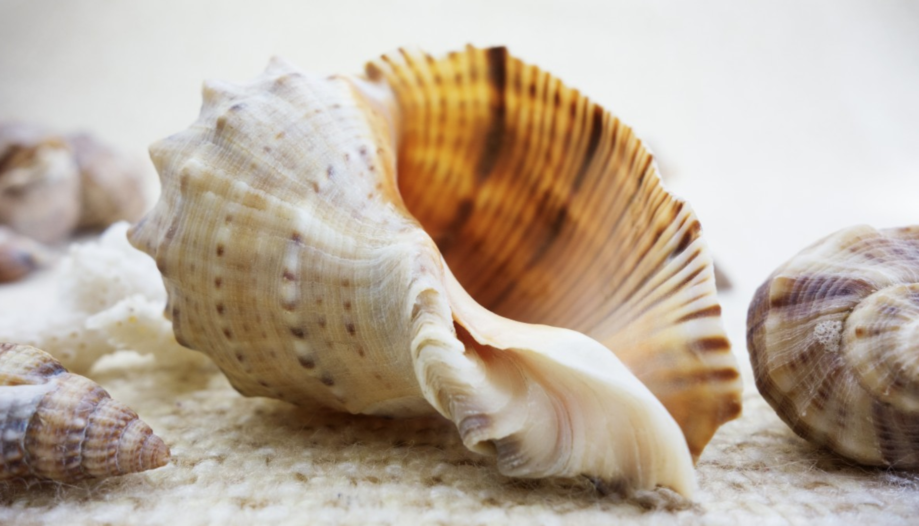 how seashells can be an invaluable survival resource survivalkit com