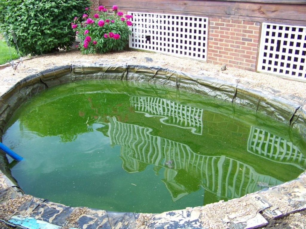 How To Control Algae Growth In Small Ponds